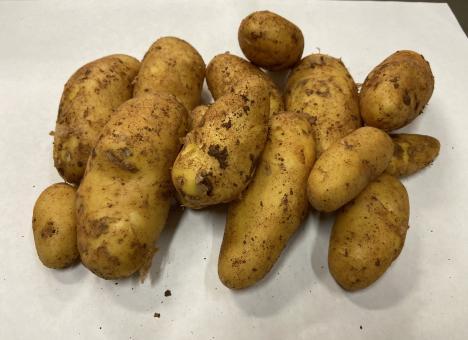 Kartoffeln Ditta per kg