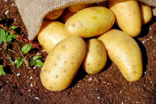 Kartoffeln speckig gewaschen Österreich per kg